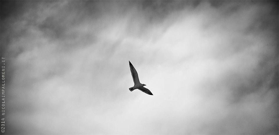 Sulle ali della libertà..