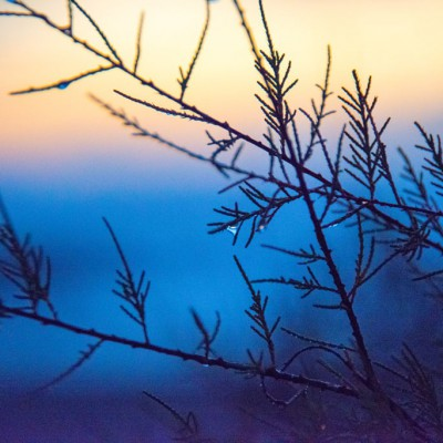 Gocce d'alba